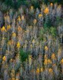 Last of fall colors 090