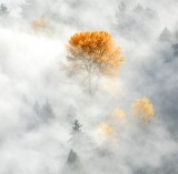 Yellow Trees above the fog, Woodenville 051