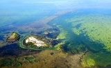 Upper Arsnicker Keys, Everglades National Park, Florida 263