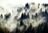 Mysterious Forest in Snoqualmie River Valley 262