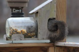 Squirrel in a jar