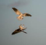 CIC 174 Birds