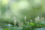 2N9B1494 mayflower / dalkruid