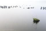 2N9B7854 dry peaces of moor / drooggevallen stukjes hoogveen