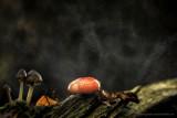 2N9B0582  toadstool