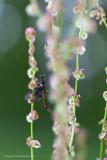 2N9B8308 peekaboo!  mayfly