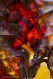 2N9B3751 autumn leave