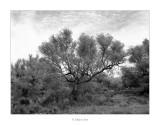 22/04/2017 · Terres ermes i olivera