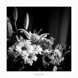 11/12/2017 · Flors