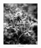 03/05/2018 · Paeoniaceae
