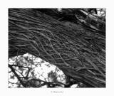 09/05/2018 · Juniperus