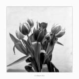 03/06/2018 · Liliaceae