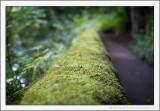 Green River Walk