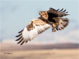 hawks__falcons_vultures