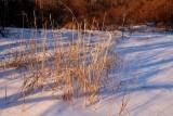 Sunkist Winter's Grasses
