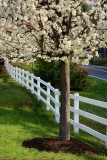 Spring Along the Fence Row