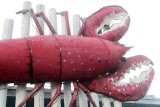 The Lobster - Up Close & Personal