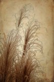 The Grasses of Late Autumn