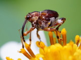 Insects & Macro