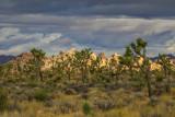 Joshua Tree National Park for a reason.