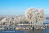 Rijp - Hoar-frost