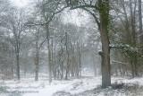 Oud bos, sneeuw