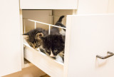 What Could Be Better Than One Kitten in a Drawer......