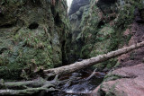 In the gorge by the Devil's Pulpit