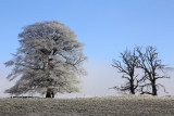 Frosty & foggy morning near Strathblane