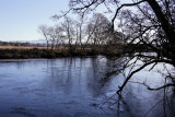 Endrick Water nearly frozen at RSPB Loch Lomond