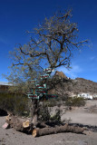 Tree with Directional Signs