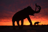 Mammoths at Sunrise, Galleta Meadows