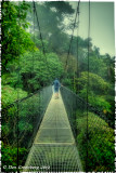 Across a Hanging Bridge in the Rain