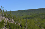 Forested Yellowstone