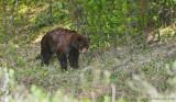 Waking Black Bear
