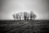 shenandoah_np_trees