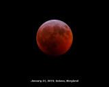 Super Blood Wolf Moon (around midnight)