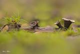 Fungi and mosses