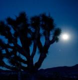 Full Moon & Silhouette