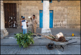 Preparing a  plant near Havana old square