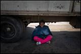 Seeking shadow under a truck a warm day