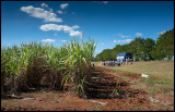 A break to watch suger cane