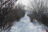parc-vacaresti-iarna-bucuresti_03.jpg