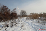 parc-vacaresti-iarna-bucuresti_19.JPG