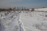 parc-vacaresti-iarna-bucuresti_25.JPG