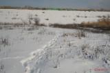 parc-vacaresti-iarna-bucuresti_26.JPG