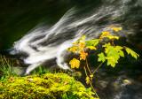 White Dragon - Swallow Falls