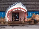 Big Shark Bites