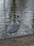 Reflections with heron
