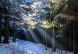 la forêt de Grendelbruch